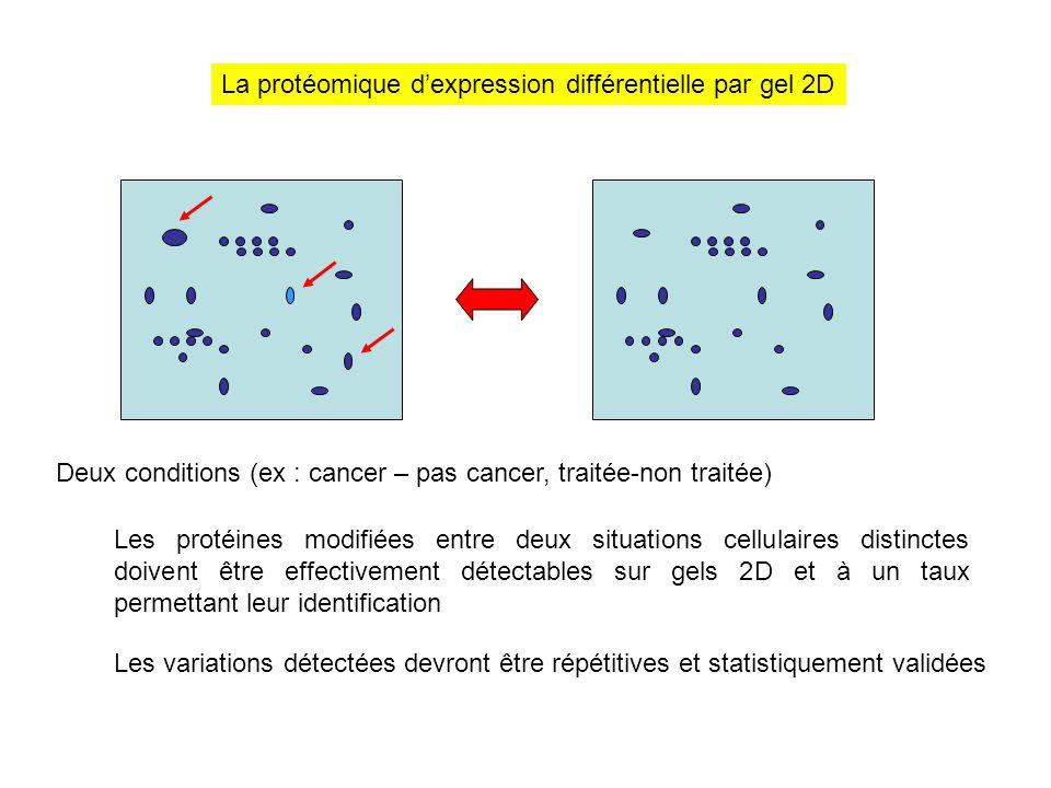 La protéomique d'expression différentielle par gel 2D Deux conditions (ex : cancer – pas cancer, traitée-non traitée) Les protéines modifiées entre de