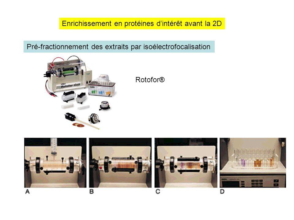 Enrichissement en protéines d'intérêt avant la 2D Pré-fractionnement des extraits par isoélectrofocalisation Rotofor®