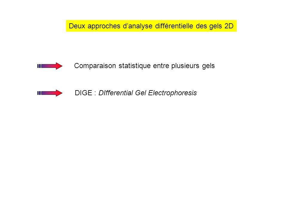 Acquisition des images Gel 2DDonnées numériques x y Les pixels ont une valeur de densité optique (DO) proportionnelle à l'intensité du signal enregistré Dans un gel le rapport de DO entre le plus petit spot et le plus gros est de 10 4 Méthode de détection Sensible Linéaire