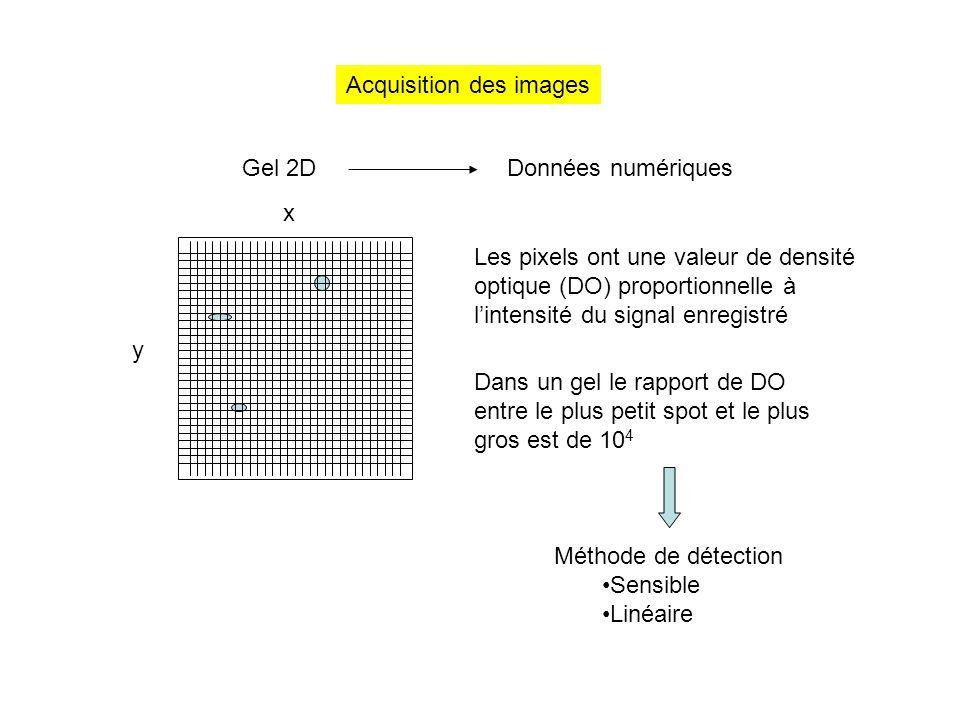 Acquisition des images Gel 2DDonnées numériques x y Les pixels ont une valeur de densité optique (DO) proportionnelle à l'intensité du signal enregist