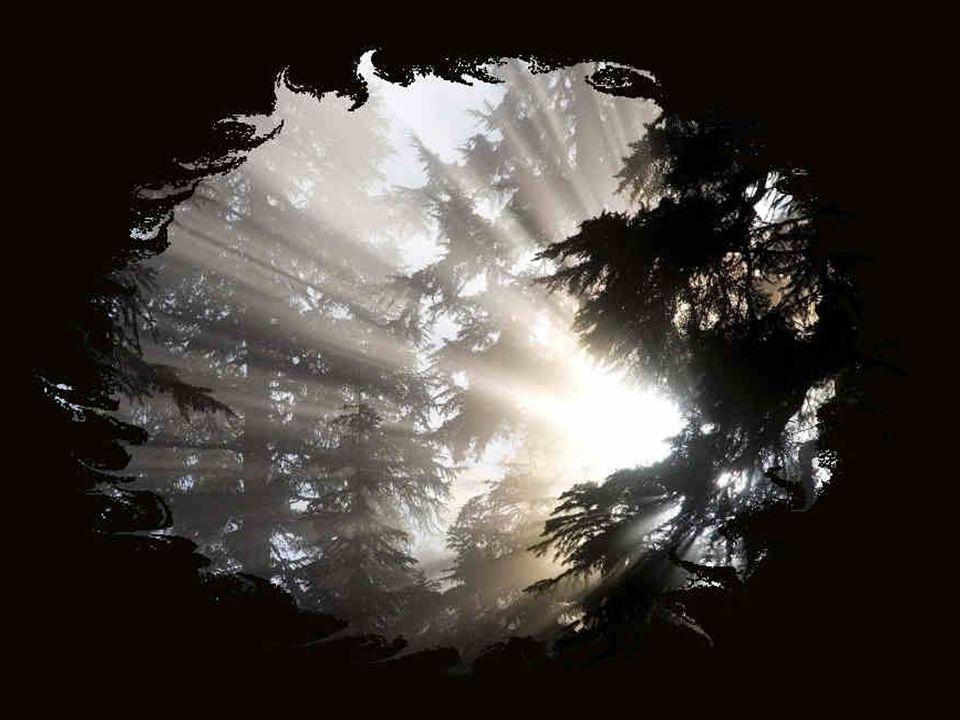 L'avenir appartient à ceux qui croient à la beauté de leurs rêves et qui ont la certitude qu'ils pourront les réaliser. - Eleanor Roosevelt