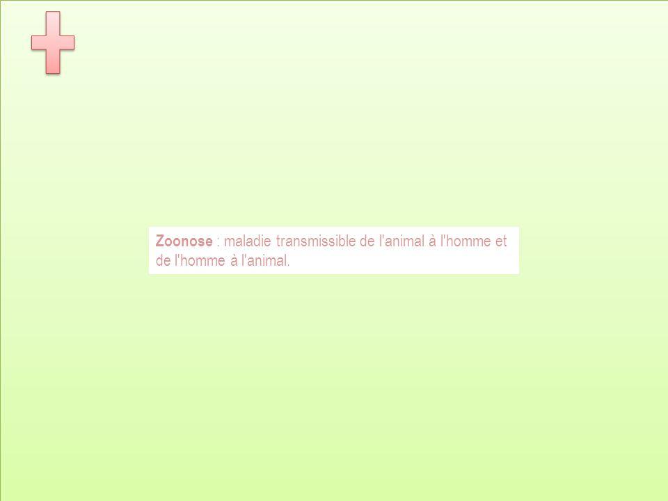 Zoonose : maladie transmissible de l'animal à l'homme et de l'homme à l'animal.