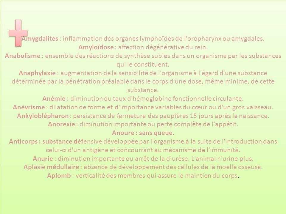 Amygdalites : inflammation des organes lymphoïdes de l'oropharynx ou amygdales. Amyloïdose : affection dégénérative du rein. Anabolisme : ensemble des