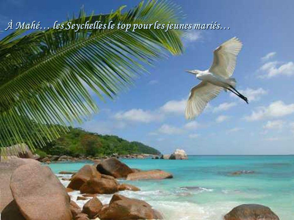 Port St-Louis Guadeloupe l'Anse du souffleur …Un paradis.