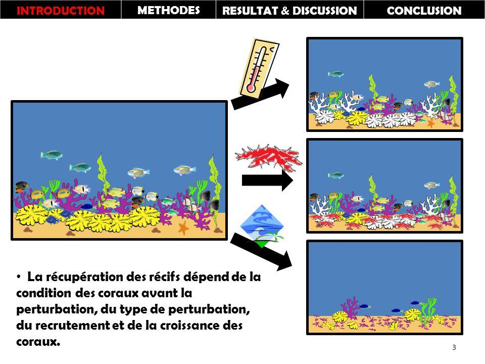 INTRODUCTIONMETHODESRESULTAT & DISCUSSIONCONCLUSION La récupération des récifs dépend de la condition des coraux avant la perturbation, du type de perturbation, du recrutement et de la croissance des coraux.