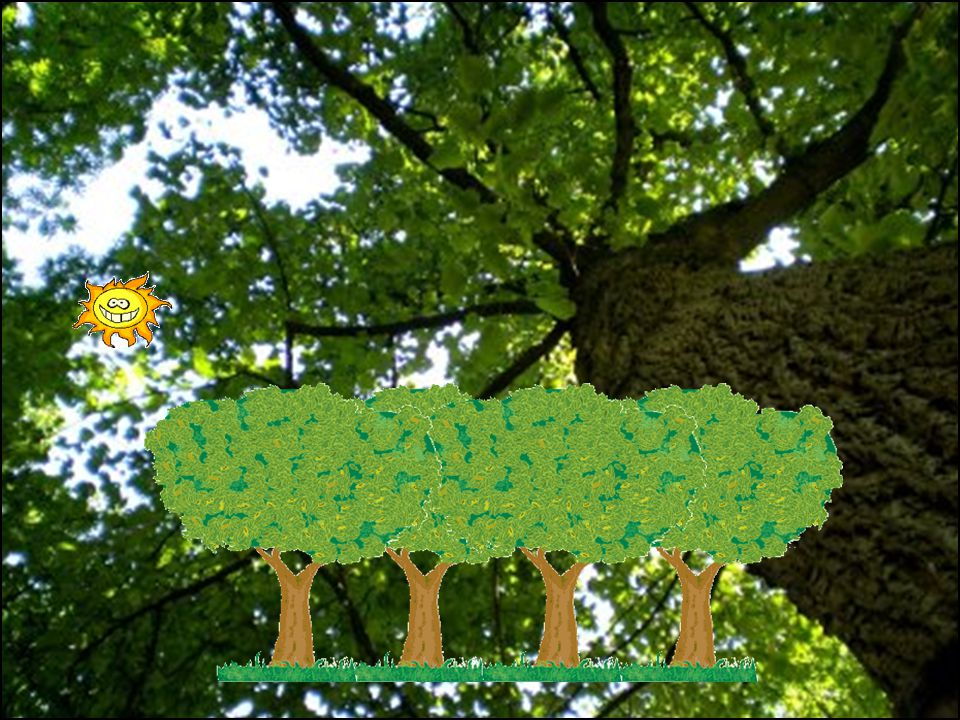 2.- Il faut planter des arbres et arbustes pour conserver la nature
