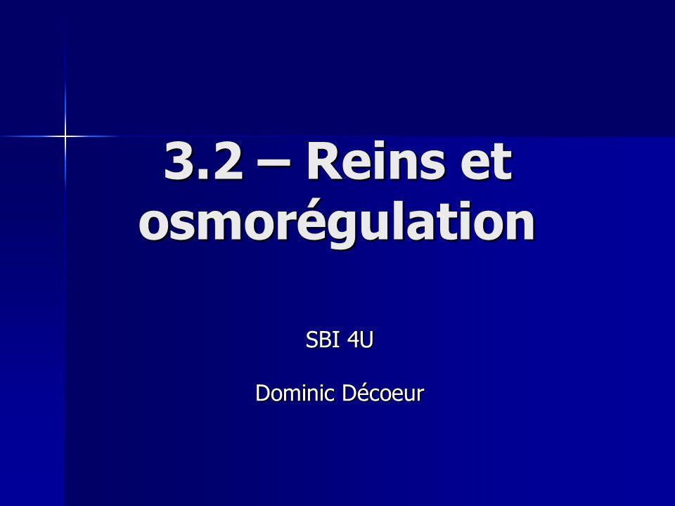 3.2 – Reins et osmorégulation SBI 4U Dominic Décoeur