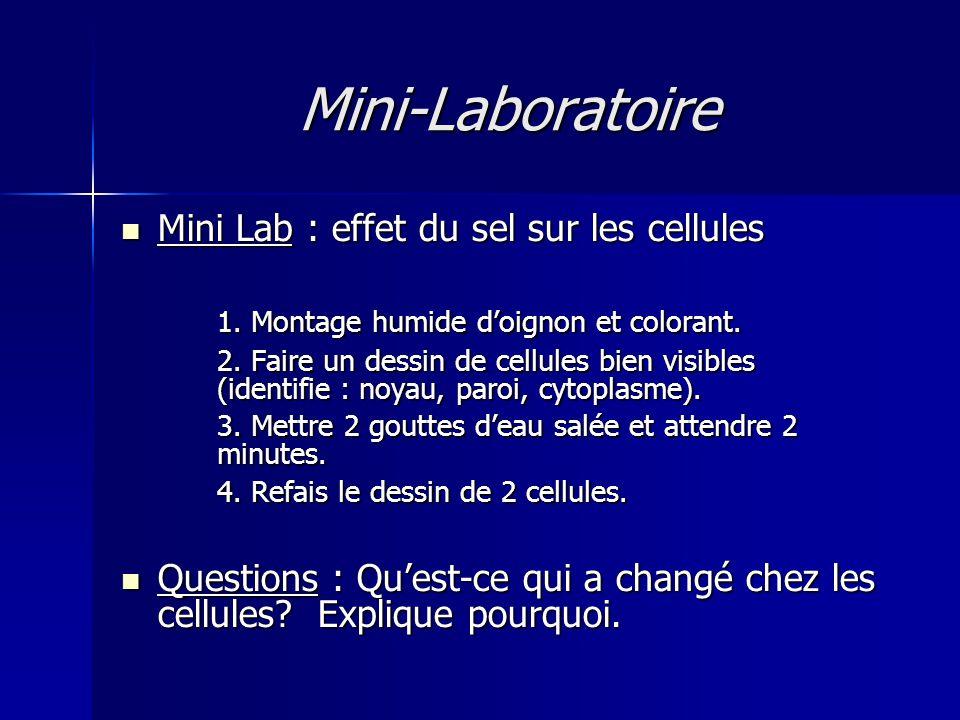 Mini-Laboratoire Mini Lab : effet du sel sur les cellules Mini Lab : effet du sel sur les cellules 1.