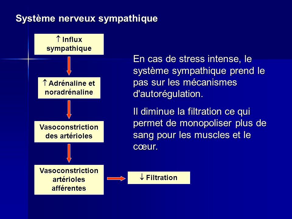 Système nerveux sympathique  Influx sympathique  Adrénaline et noradrénaline Vasoconstriction des artérioles  Filtration Vasoconstriction artérioles afférentes En cas de stress intense, le système sympathique prend le pas sur les mécanismes d autorégulation.