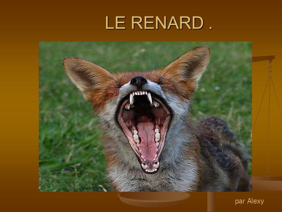 LE RENARD. par Alexy