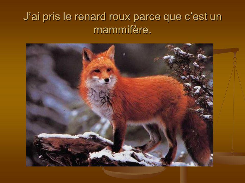 Les renards vivent en Amérique du Nord, en Europe, en Asie, en Afrique du Nord, au Japon et en Inde.