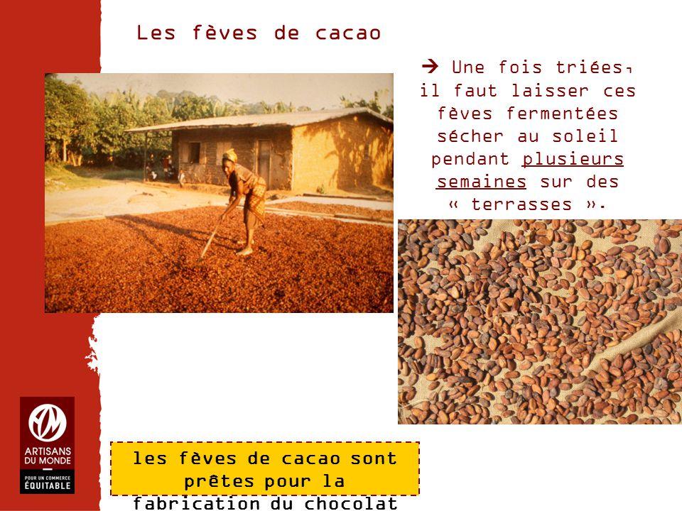 Chiffres Les fèves de cacao  Une fois triées, il faut laisser ces fèves fermentées sécher au soleil pendant plusieurs semaines sur des « terrasses ».
