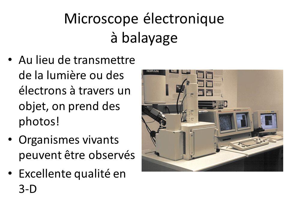Microscope électronique à balayage Au lieu de transmettre de la lumière ou des électrons à travers un objet, on prend des photos! Organismes vivants p