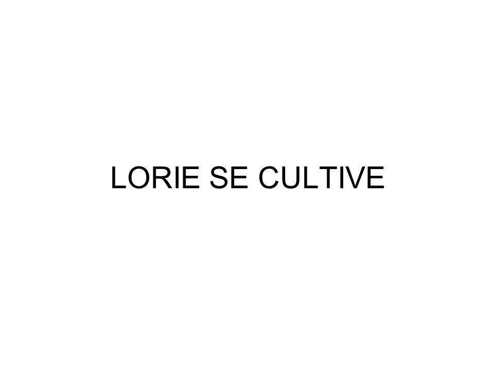 LORIE SE CULTIVE