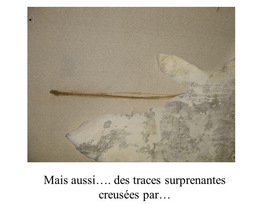 Mais aussi…. des traces surprenantes creusées par…