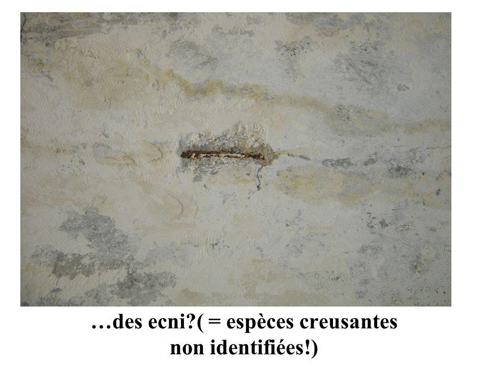 …des ecni ( = espèces creusantes non identifiées!)