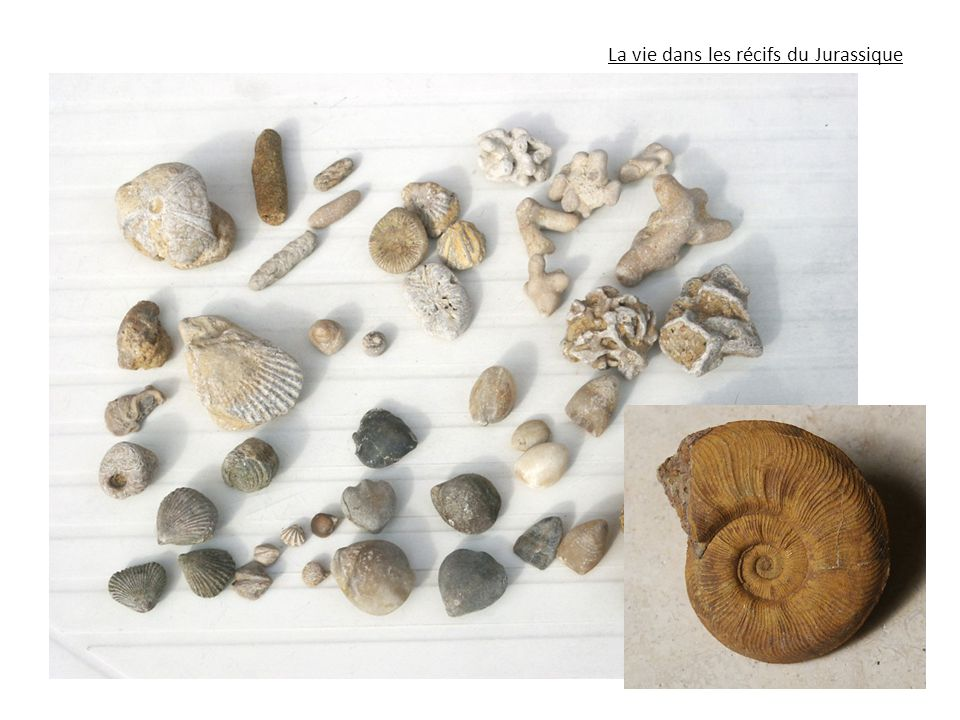 La vie dans les récifs du Jurassique