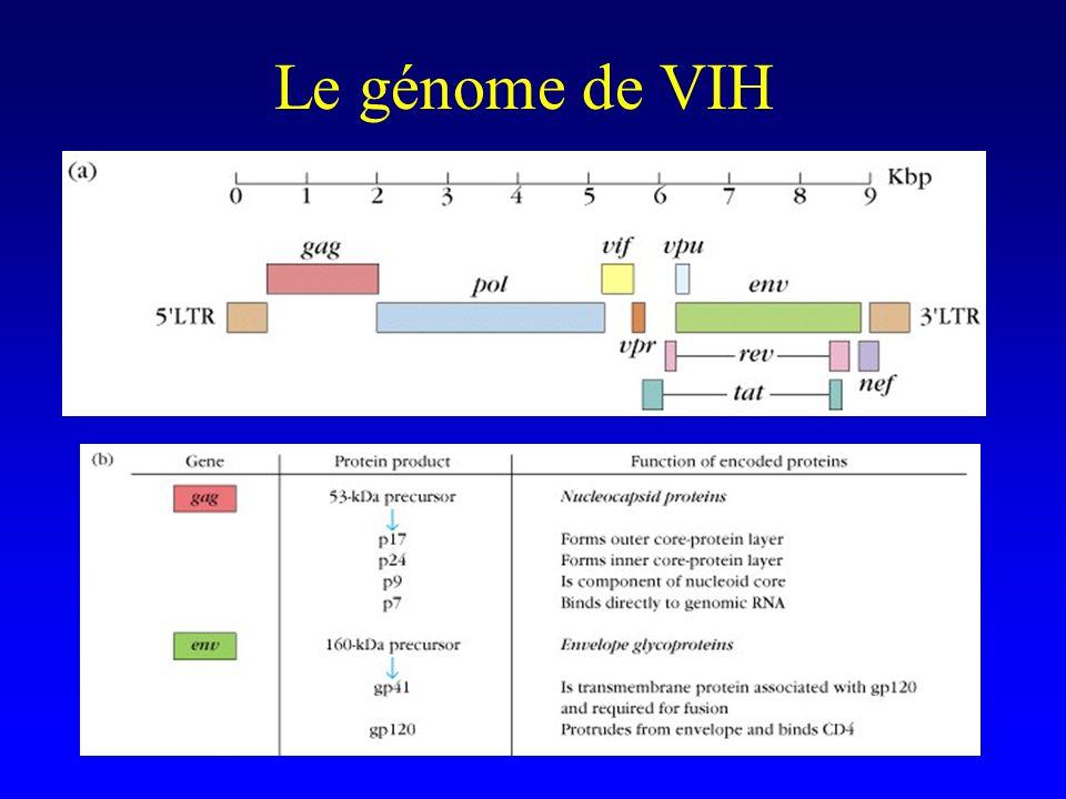 Le génome de VIH