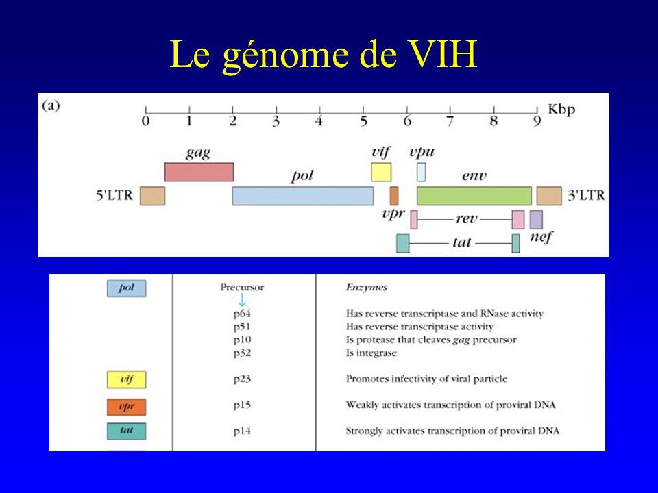 Digressions sur la syphilis Tests « non spécifiques » –VDRL et RPR (anticorps dirigés contre les cardiolipines) Très sensibles Faible affinité : disparaissent « vite » après traitement (2-5 ans) Tests spécifiques –TPHA : restent positifs à vie