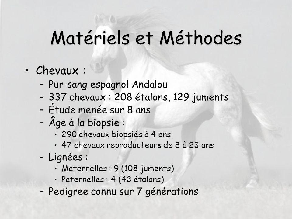 Conclusions Effets significatifs de –âge –sexe –profondeur de prélèvement pour tous les types de fibres mais + pour les II h² fibres I >h² fibres II (cf autres espèces) Applications à la sélection des chevaux d'endurance et de loisirs en association avec d'autres caractères physiologiques ( cardio- vasculaires, locomoteurs et métaboliques)