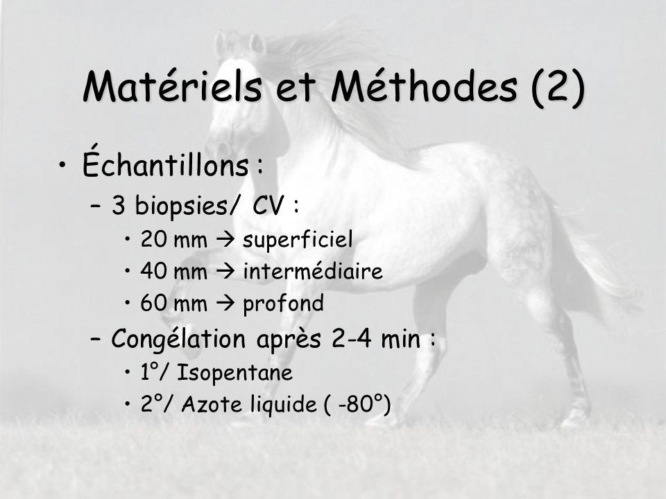 Usages en tant que futur vétérinaire Conseil aux éleveurs pour la sélection des reproducteurs Evaluation du potentiel d'un cheval avant sa mise à l'entraînement ?