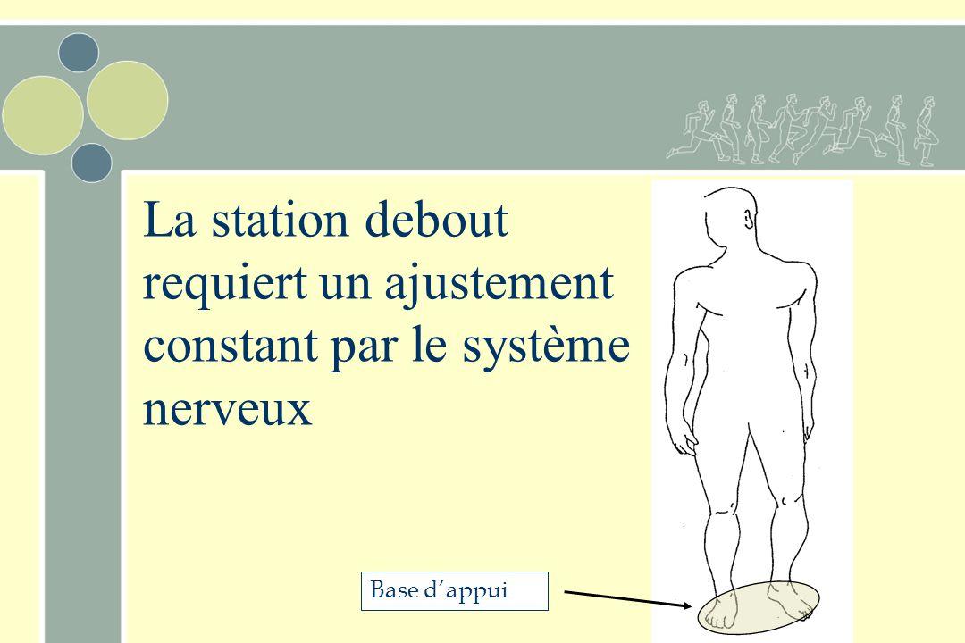 La station debout requiert un ajustement constant par le système nerveux Base d'appui