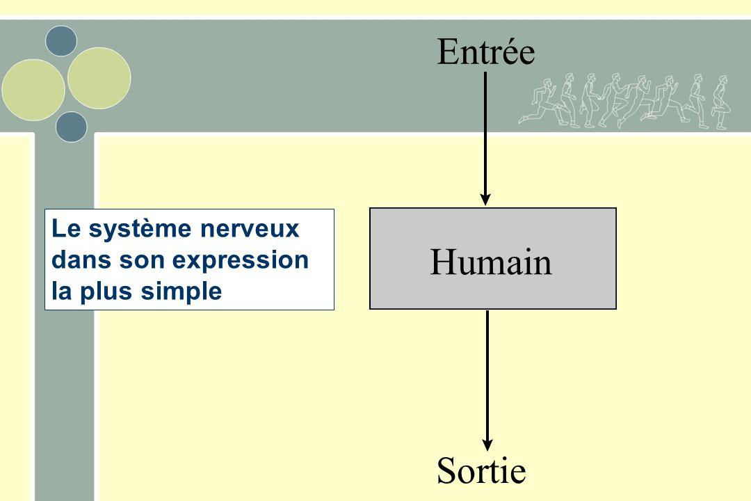 Le système nerveux dans son expression la plus simple Humain Entrée Sortie