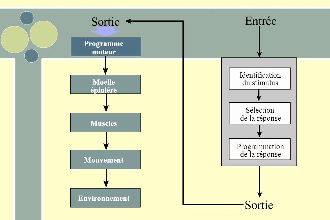 Entrée Sortie Identification du stimulus Sélection de la réponse Programmation de la réponse Programme moteur Moelle épinière Muscles Mouvement Environnement