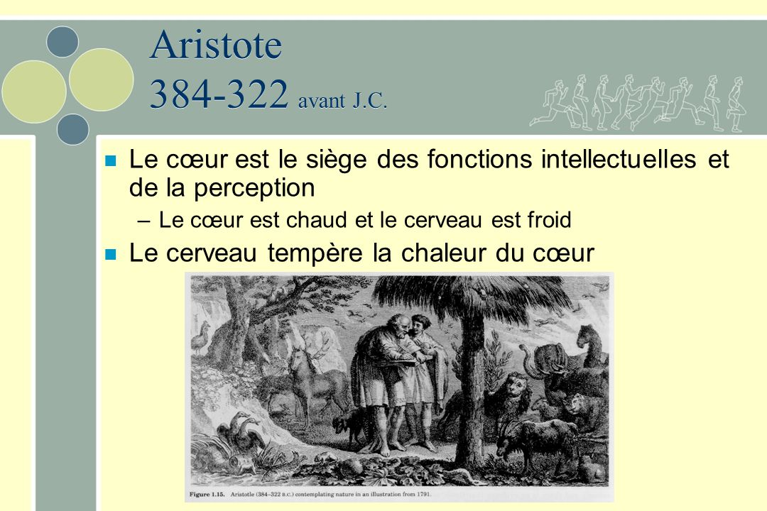 Aristote 384-322 avant J.C. n Le cœur est le siège des fonctions intellectuelles et de la perception –Le cœur est chaud et le cerveau est froid n Le c