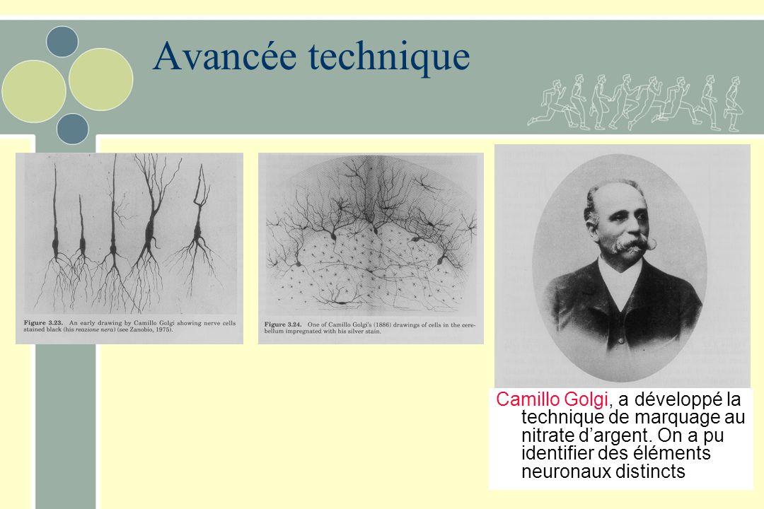 Avancée technique Camillo Golgi, a développé la technique de marquage au nitrate d'argent. On a pu identifier des éléments neuronaux distincts