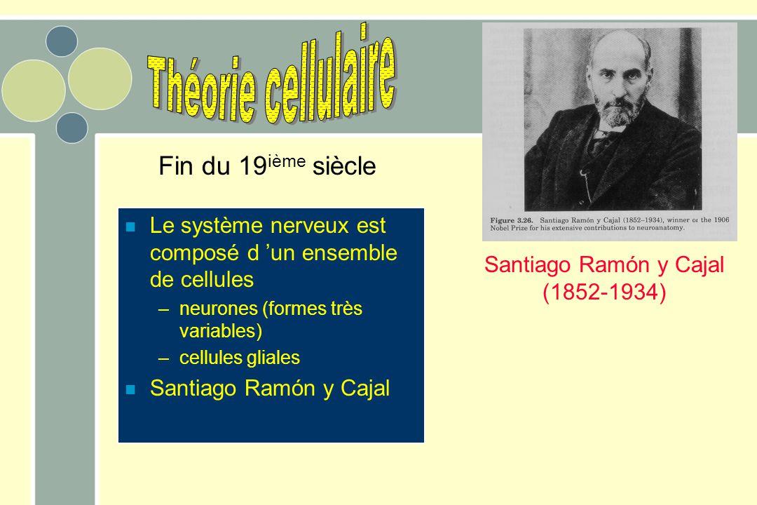 n Le système nerveux est composé d 'un ensemble de cellules –neurones (formes très variables) –cellules gliales n Santiago Ramón y Cajal Fin du 19 ième siècle Santiago Ramón y Cajal (1852-1934)