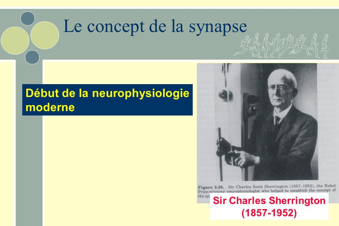 Le concept de la synapse Sir Charles Sherrington (1857-1952) Début de la neurophysiologie moderne