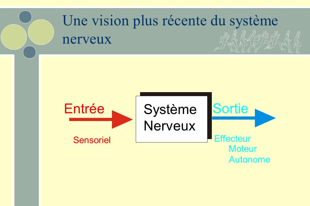 Une vision plus récente du système nerveux Entrée Sortie Sensoriel Moteur Effecteur Autonome Système Nerveux