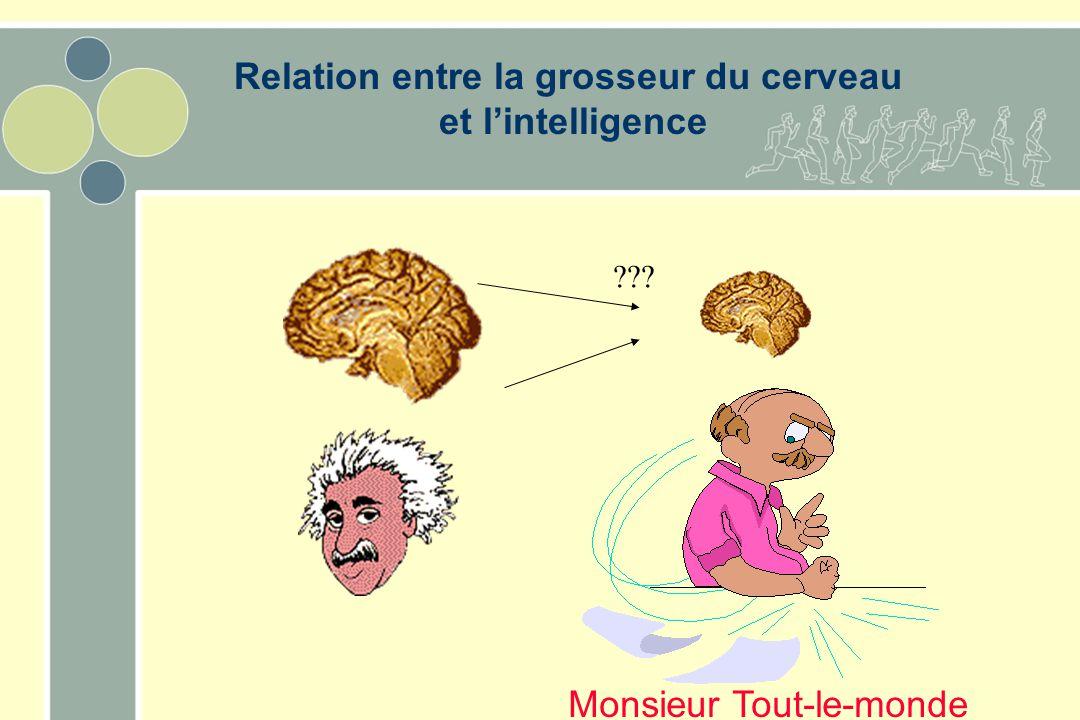 ??? Monsieur Tout-le-monde Relation entre la grosseur du cerveau et l'intelligence