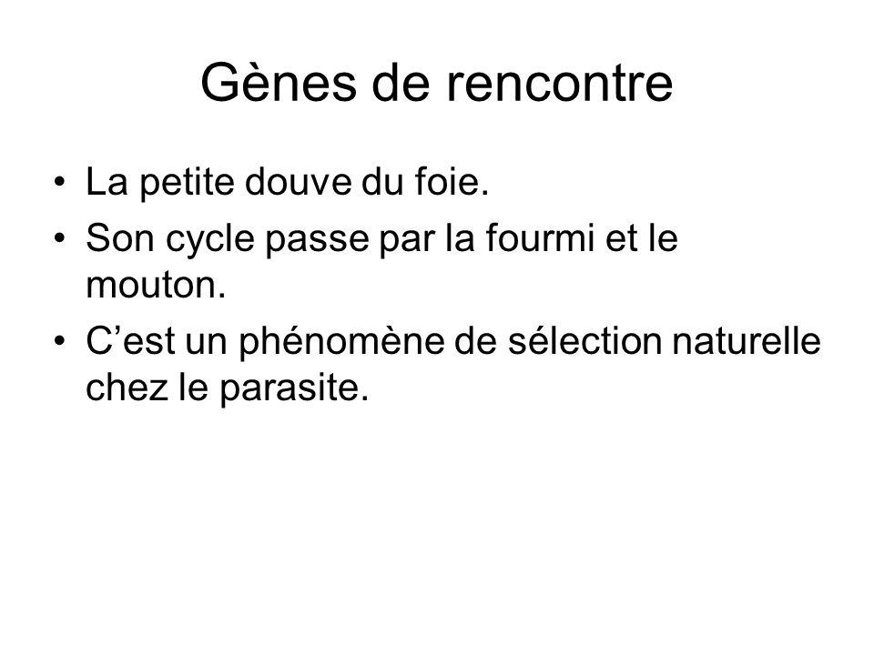 Gènes de rencontre La petite douve du foie. Son cycle passe par la fourmi et le mouton. C'est un phénomène de sélection naturelle chez le parasite.