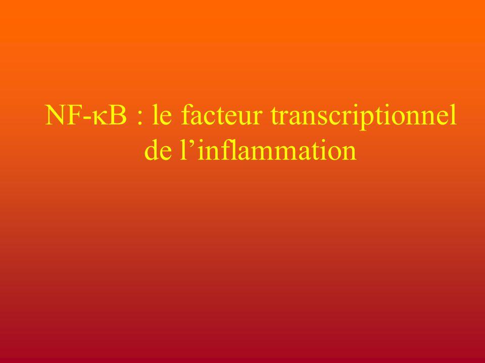 NF-  : le facteur transcriptionnel de l'inflammation
