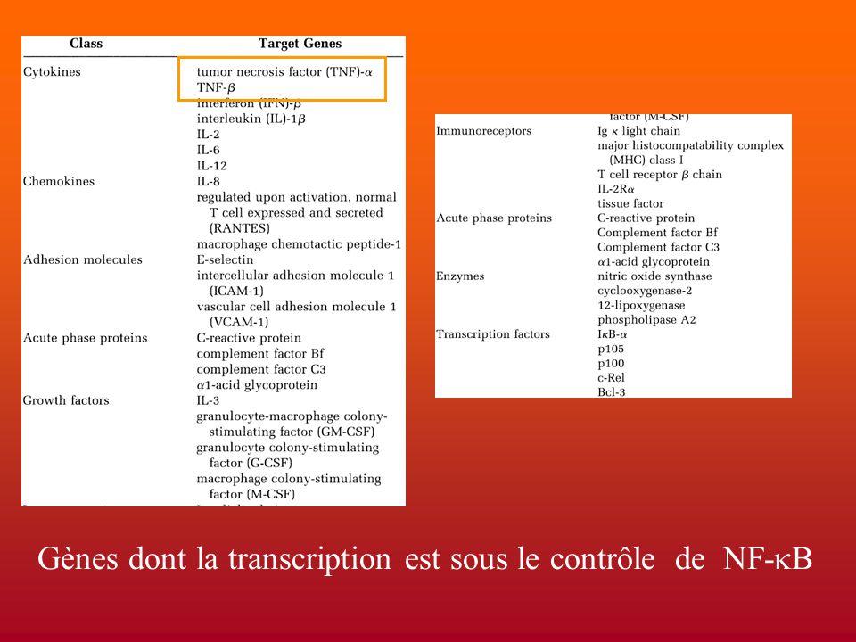 Gènes dont la transcription est sous le contrôle de NF-  B