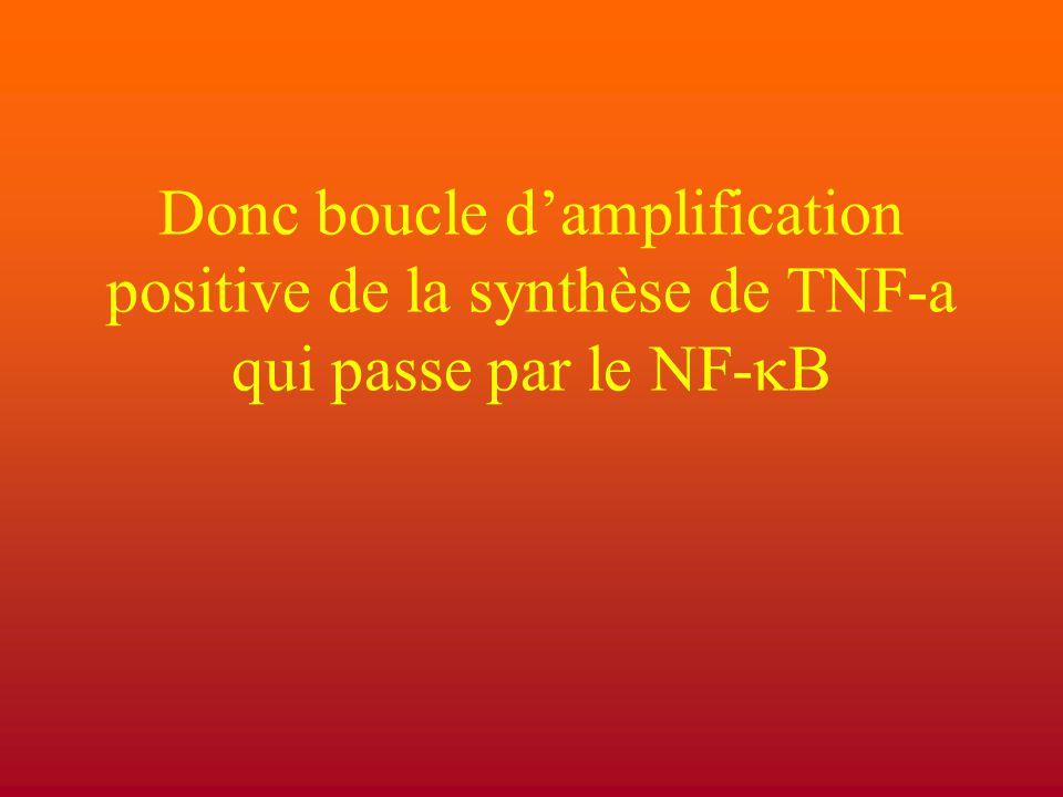 Donc boucle d'amplification positive de la synthèse de TNF-a qui passe par le NF-  B