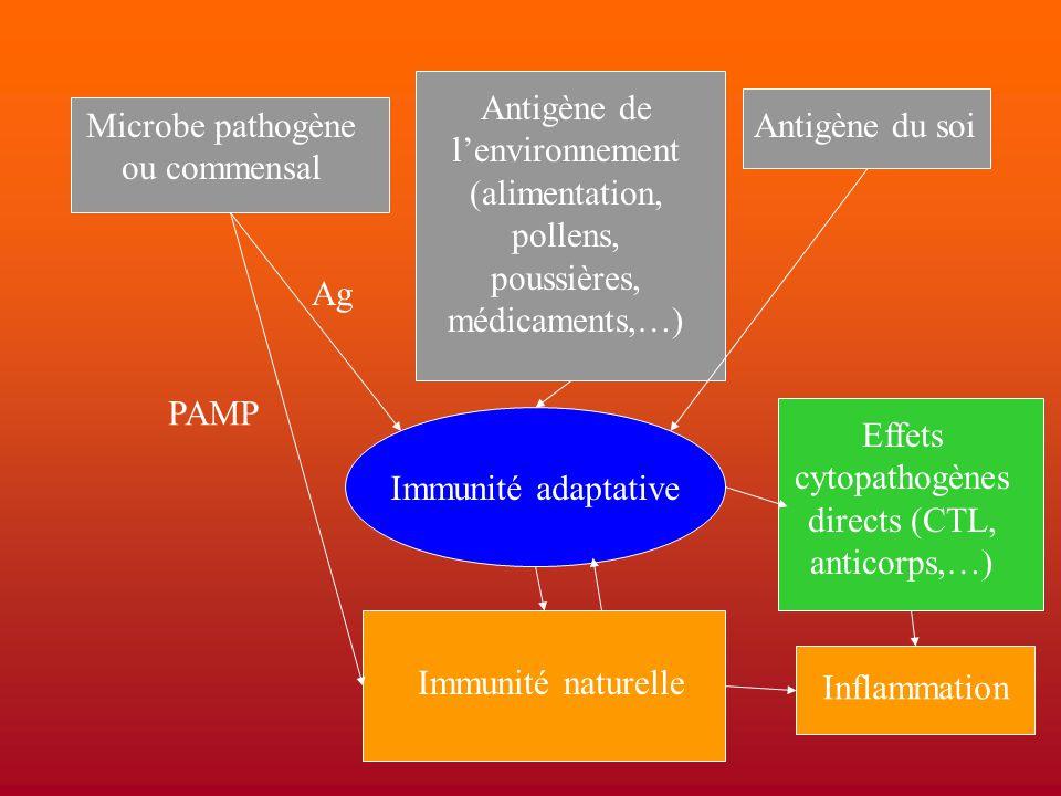 Microbe pathogène ou commensal Antigène de l'environnement (alimentation, pollens, poussières, médicaments,…) Antigène du soi Immunité adaptative Immu