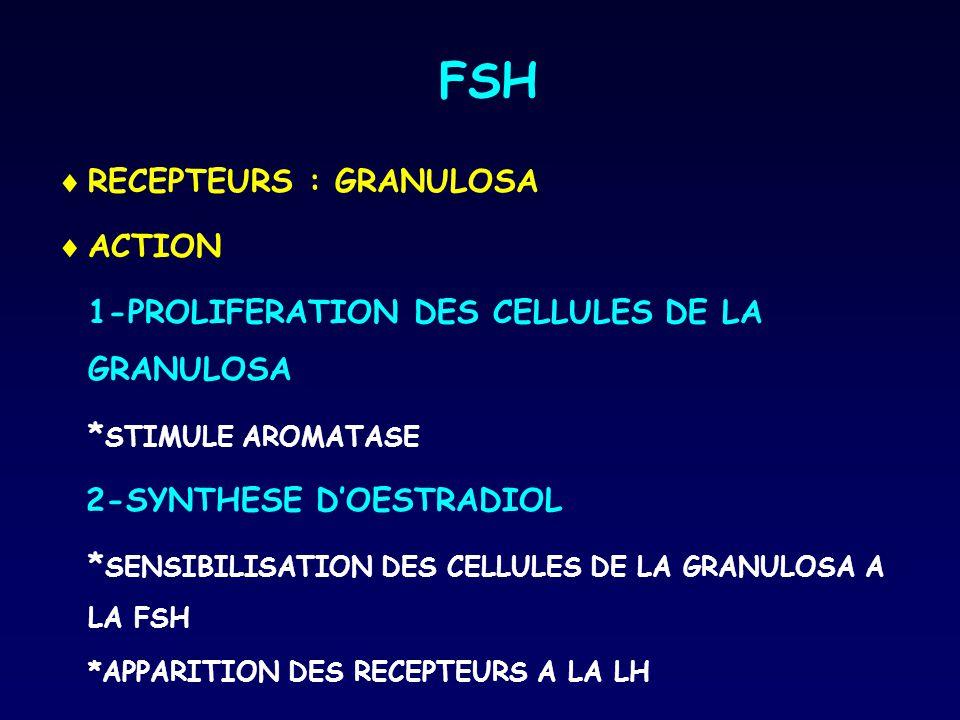 FSH  RECEPTEURS : GRANULOSA  ACTION 1-PROLIFERATION DES CELLULES DE LA GRANULOSA * STIMULE AROMATASE 2-SYNTHESE D'OESTRADIOL * SENSIBILISATION DES C