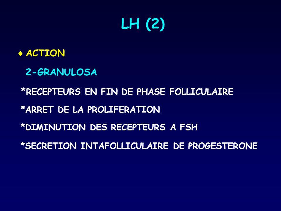 LH (2)  ACTION 2-GRANULOSA * RECEPTEURS EN FIN DE PHASE FOLLICULAIRE *ARRET DE LA PROLIFERATION *DIMINUTION DES RECEPTEURS A FSH *SECRETION INTAFOLLI
