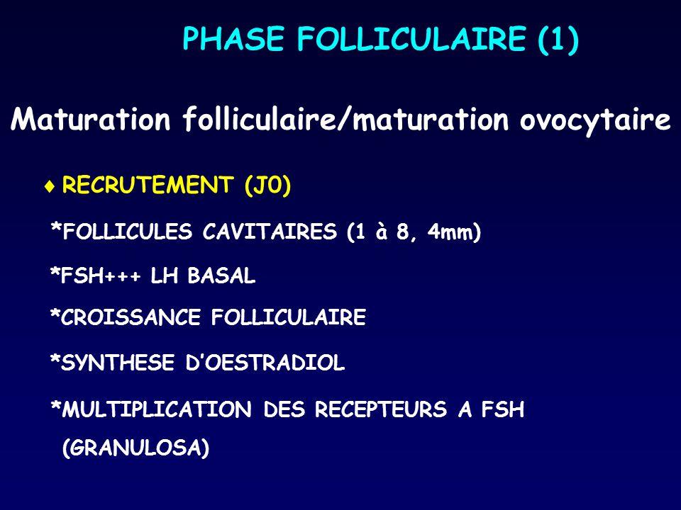Maturation folliculaire/maturation ovocytaire  RECRUTEMENT (J0) * FOLLICULES CAVITAIRES (1 à 8, 4mm) *FSH+++ LH BASAL *CROISSANCE FOLLICULAIRE *SYNTH