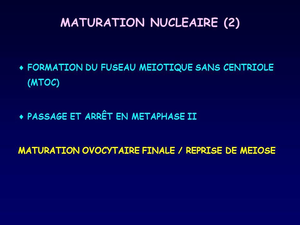 MATURATION NUCLEAIRE (2)  FORMATION DU FUSEAU MEIOTIQUE SANS CENTRIOLE (MTOC)  PASSAGE ET ARRÊT EN METAPHASE II MATURATION OVOCYTAIRE FINALE / REPRI