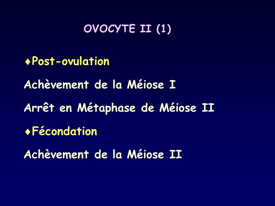 OVOCYTE II (1)  Post-ovulation Achèvement de la Méiose I Arrêt en Métaphase de Méiose II  Fécondation Achèvement de la Méiose II