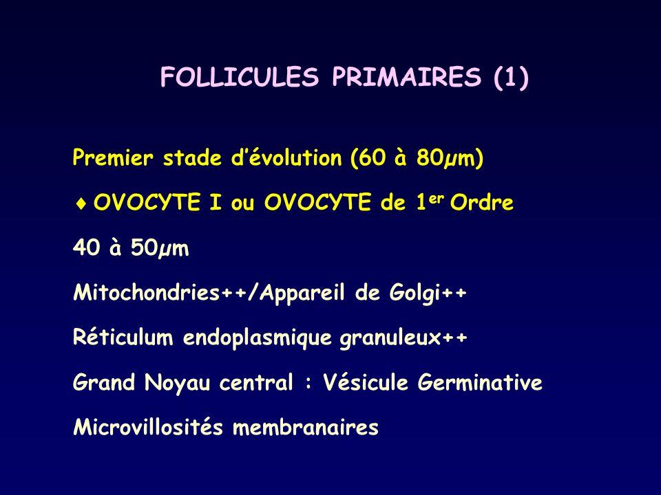 FOLLICULES PRIMAIRES (1) Premier stade d'évolution (60 à 80µm)  OVOCYTE I ou OVOCYTE de 1 er Ordre 40 à 50µm Mitochondries++/Appareil de Golgi++ Réti