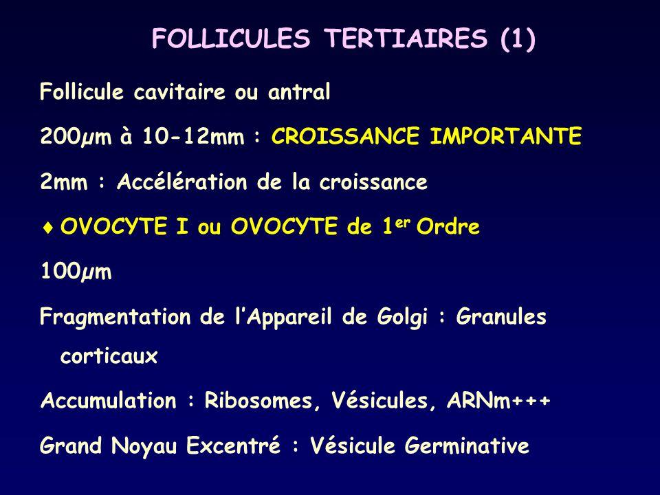 FOLLICULES TERTIAIRES (1) Follicule cavitaire ou antral 200µm à 10-12mm : CROISSANCE IMPORTANTE 2mm : Accélération de la croissance  OVOCYTE I ou OVO