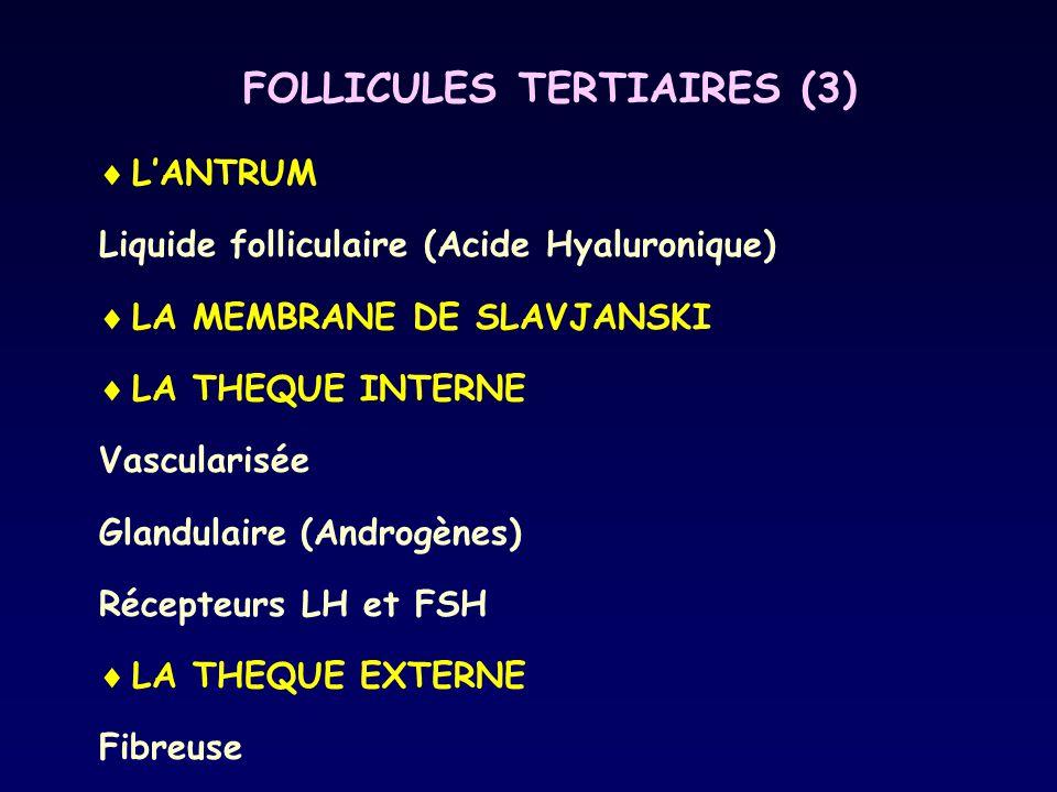 FOLLICULES TERTIAIRES (3)  L'ANTRUM Liquide folliculaire (Acide Hyaluronique)  LA MEMBRANE DE SLAVJANSKI  LA THEQUE INTERNE Vascularisée Glandulair