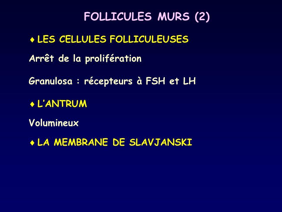 FOLLICULES MURS (2)  LES CELLULES FOLLICULEUSES Arrêt de la prolifération Granulosa : récepteurs à FSH et LH  L'ANTRUM Volumineux  LA MEMBRANE DE S