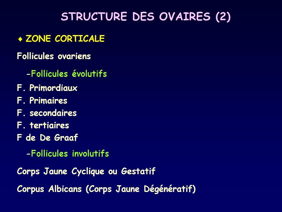 STRUCTURE DES OVAIRES (2)  ZONE CORTICALE Follicules ovariens -Follicules évolutifs F. Primordiaux F. Primaires F. secondaires F. tertiaires F de De