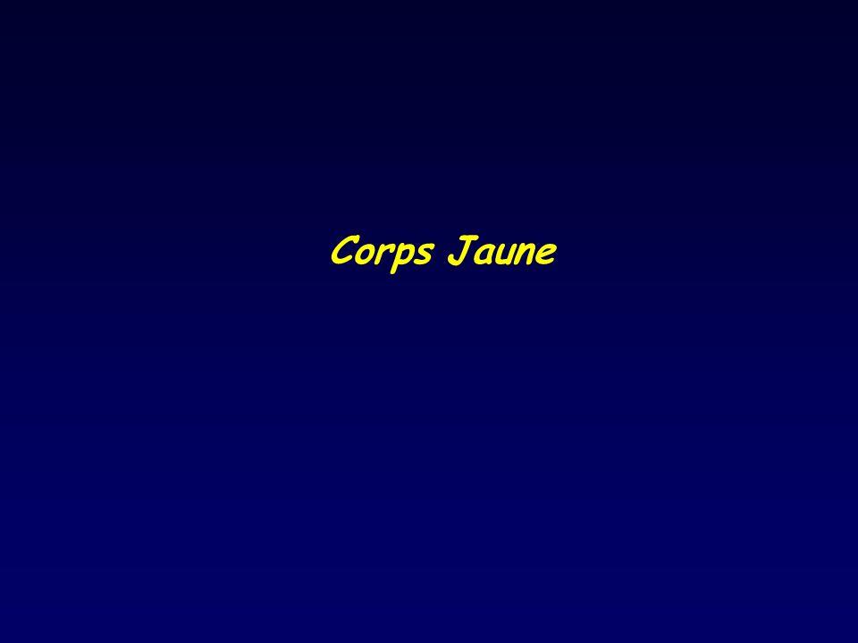 Corps Jaune